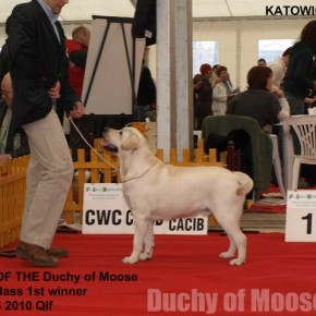 CACIB Katowice, 21.03.2009 - GUCIO wins qualification for CRUFTS 2010!!
