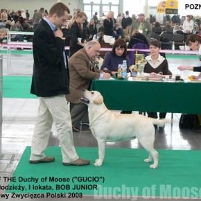 International dog Show, Poznań 2008 (PL)