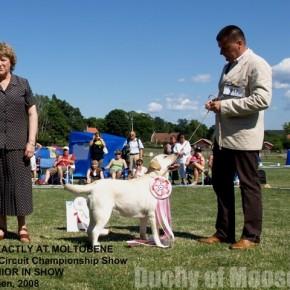 Sweden 2008 - WORLD DOG SHOW