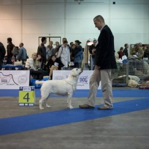 Budapest 2008 - European Dog Show 2008 & Labrador Club Show