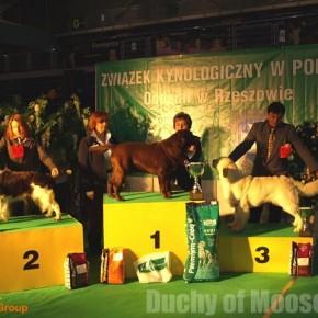 1st CACIB Dog Show, Rzeszów, 10.02.2008