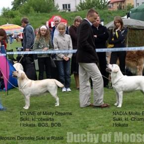 25.05.2008, Radom (PL) - CAC Dog Show