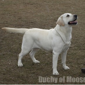 Legionowo 2012 - NADIA: Winner, very nice results of puppies