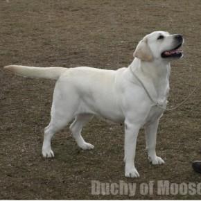 Legionowo 2012 - NADIA: Winner, very nice results of puppies